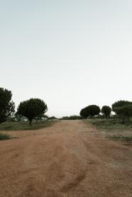 desert-5204
